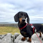 The 4 Best Dog-Friendly Boat Trips in the UK And Ireland