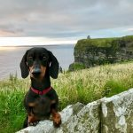 The Most Dog-Friendly Ferry Between Great Britain and Ireland