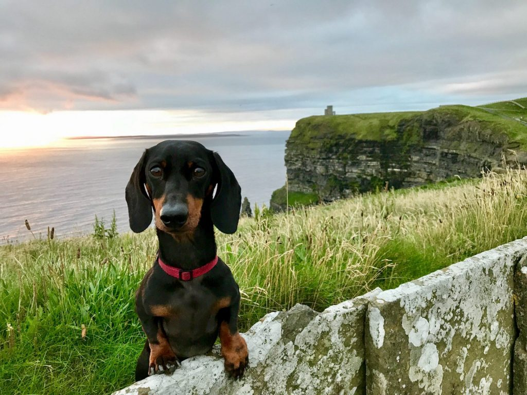 Dogs on ferry to Ireland: then visit the Cliffs of Moher