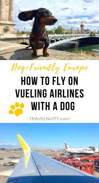 Vueling with a Dog pin