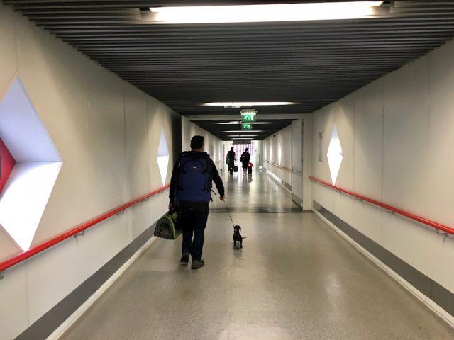 Arriving with Schnitzel