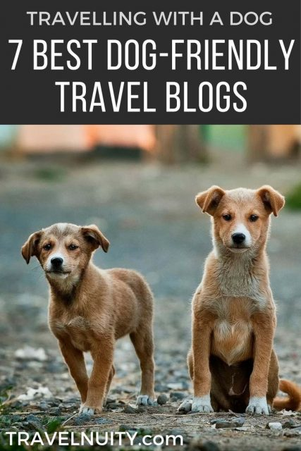 Best Dog-Friendly Travel Blogs
