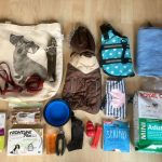 Doggie Luggage: What to Pack When Travelling with a Dog