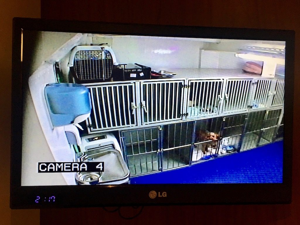Stena line dog TV channel