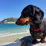 How to Care for Your Dog While on a Beach Trip