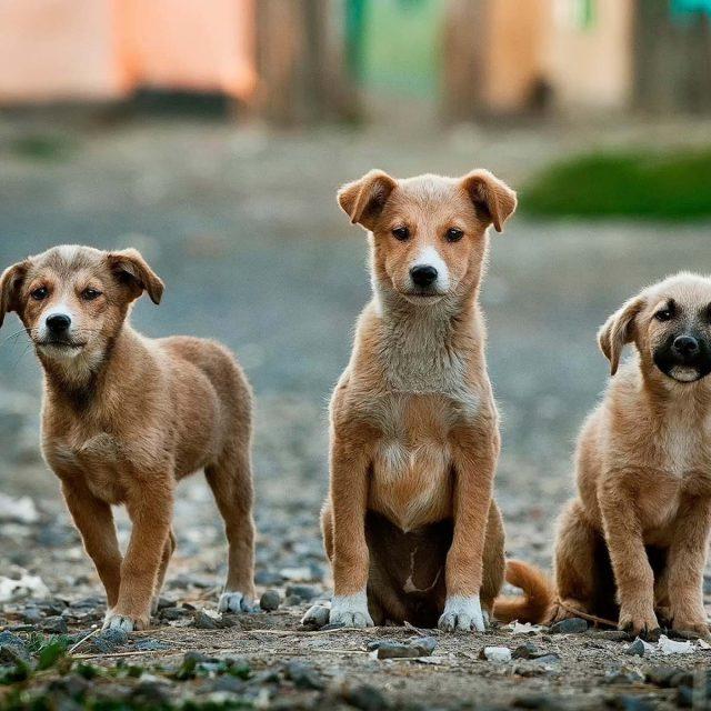 Dog-Friendly Travel Blogs
