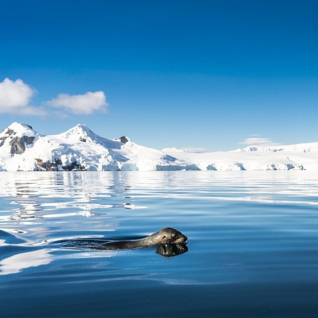 Antarctic Peninsula, Foyn Harbour © Oceanwide Expeditions