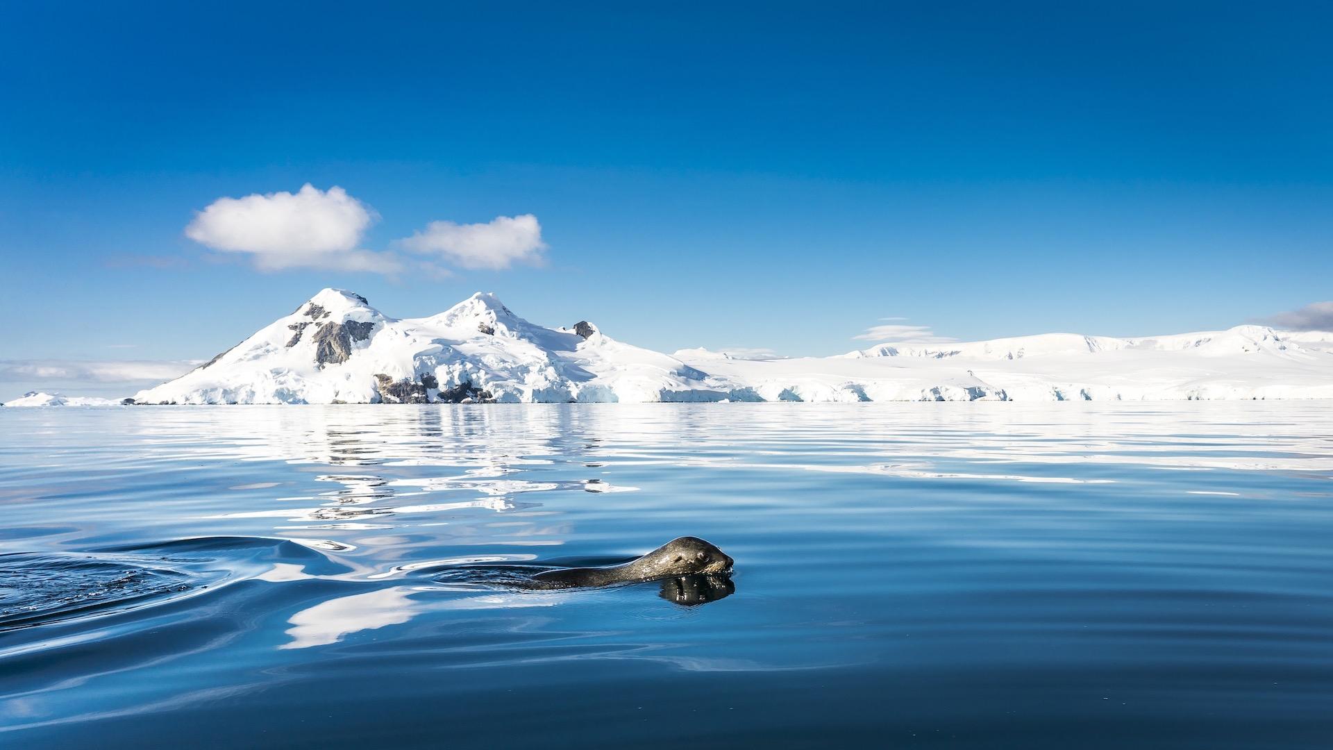 Antarctic Peninsula, Foyn Harbour © Oceanwide Expeditions