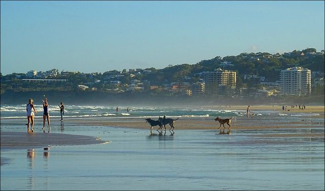 Dog-Friendly Coolum Beach