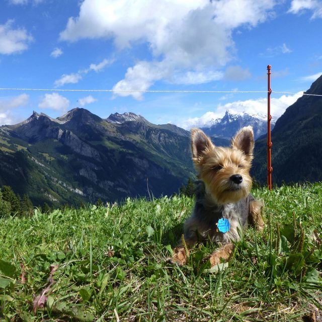 Dog-Friendly Switzerland 1