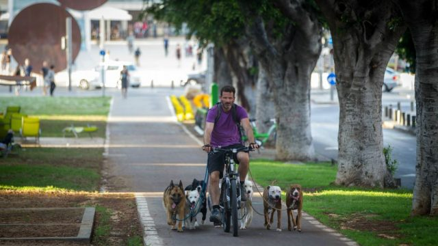 Dog-Friendly Tel Aviv