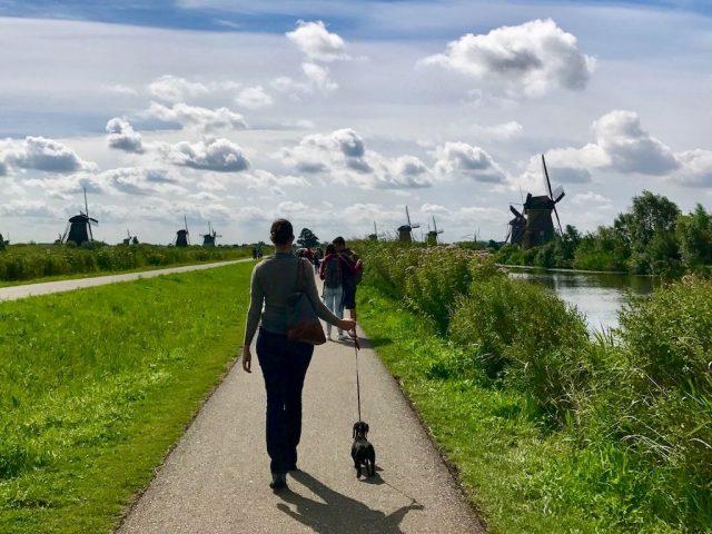 Kinderdijk Walking with Dog 1