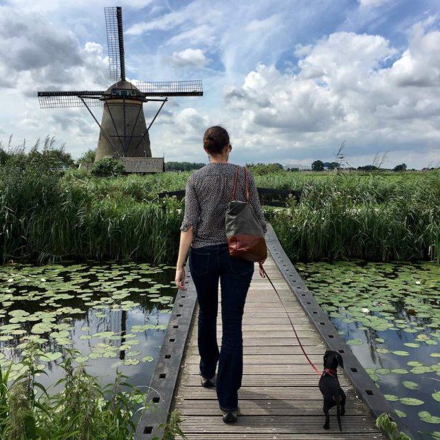Kinderdijk Walking with Dog 2