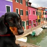 7 Fun Things to Do When Travelling with a Dog