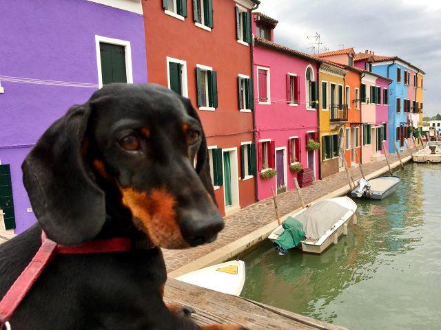 Venice with a Dog