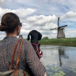 A Doggie Day Out: Visiting Kinderdijk with a Dog