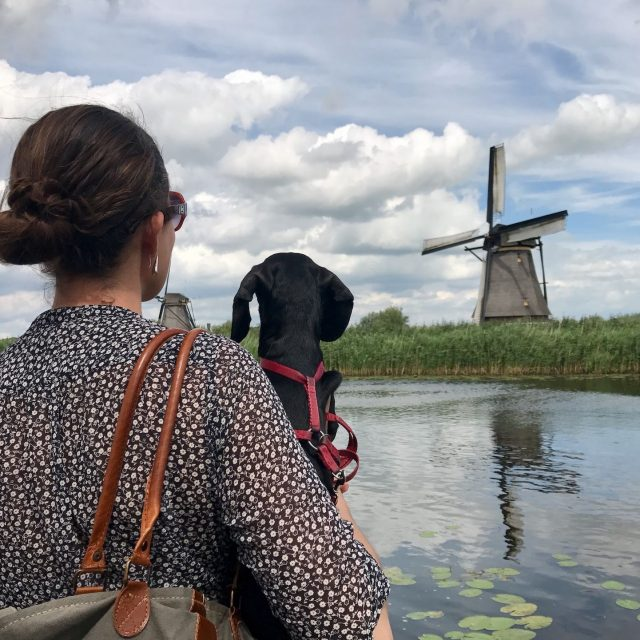 Visiting Kinderdijk with a Dog