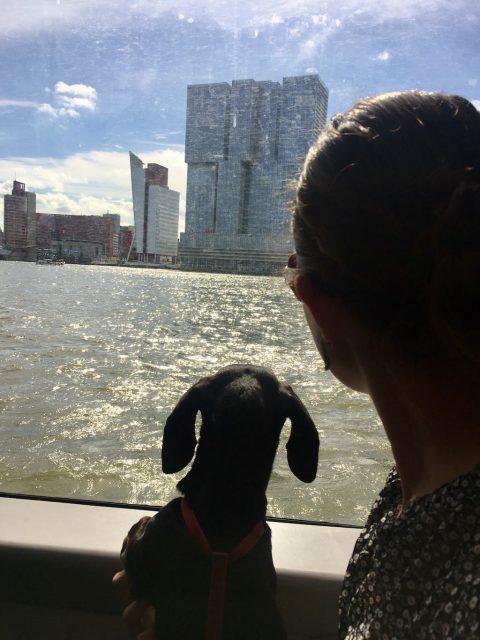 Waterbus to Kinderdijk with Dog