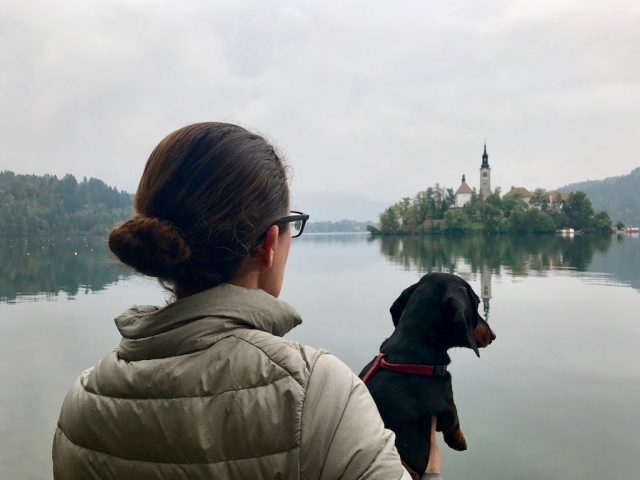 Lake Bled Reflections with Dog