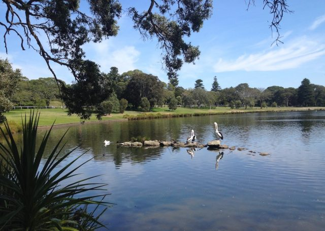 Dog-friendly Centennial Park Sydney