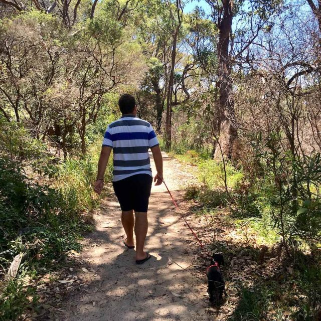 Dog-Friendly Bush Walks Sydney