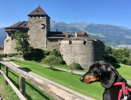 Travelling with a dog in Europe