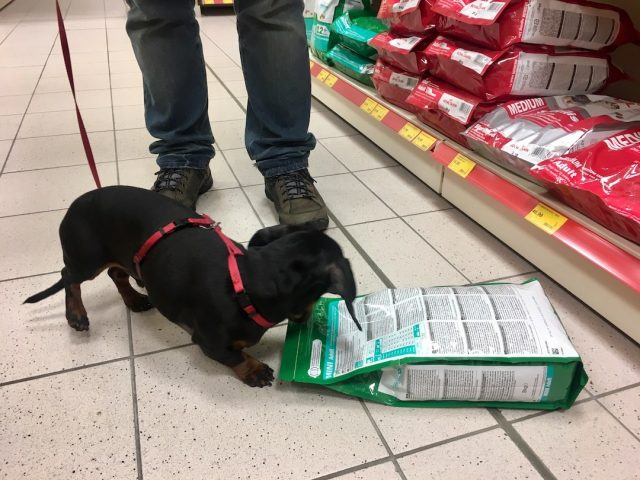Shopping in Germany with a dog
