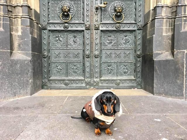 Dog outside a church in Germany