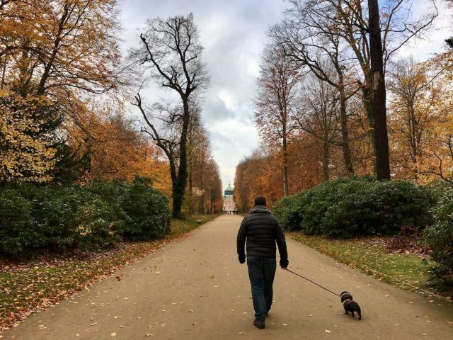 Travel to Germany with dog: At San Soucci Park
