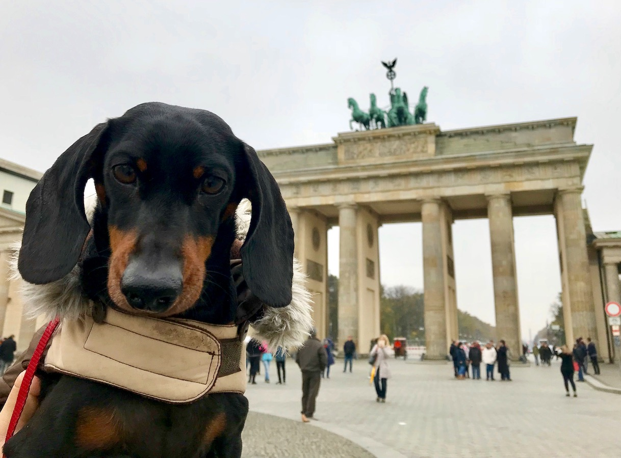 dog friendly germany travelling in germany with a dog travelnuity. Black Bedroom Furniture Sets. Home Design Ideas