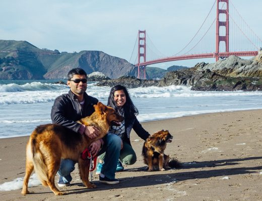 Dog-Friendly Activities in San Francisco