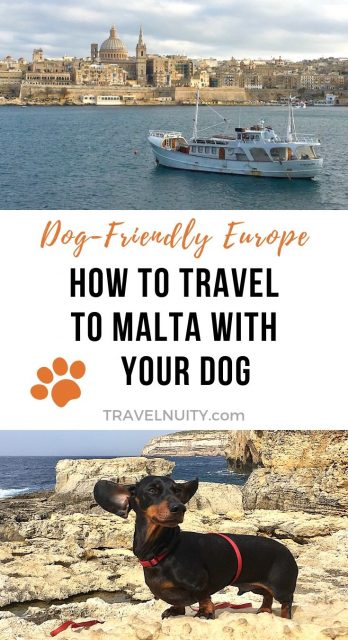 How to Travel to Malta with a Dog pin