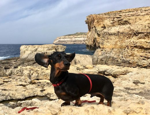 Pet travel Malta