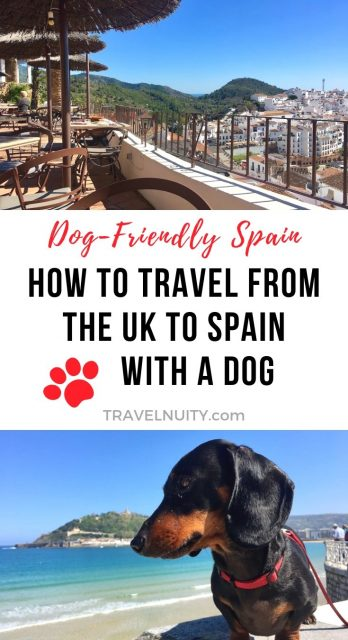 How to Travel from UK to Spain with a Dog pin