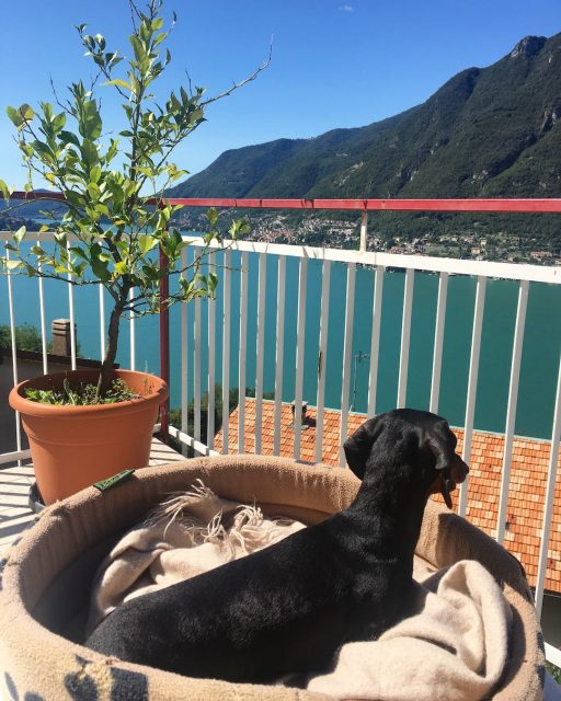 Lake Como villa with dog