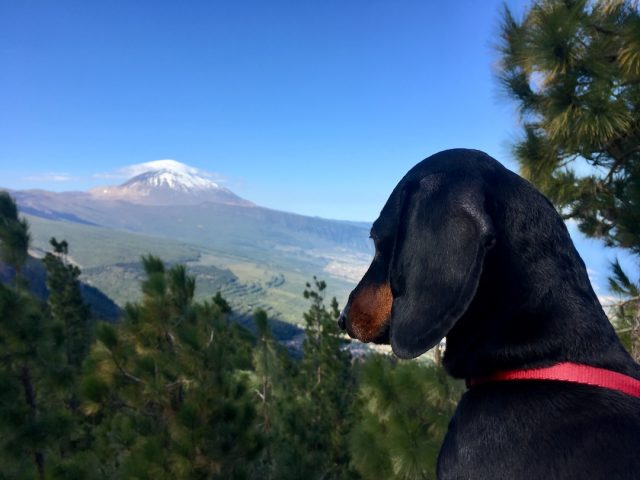Dog travel Spain