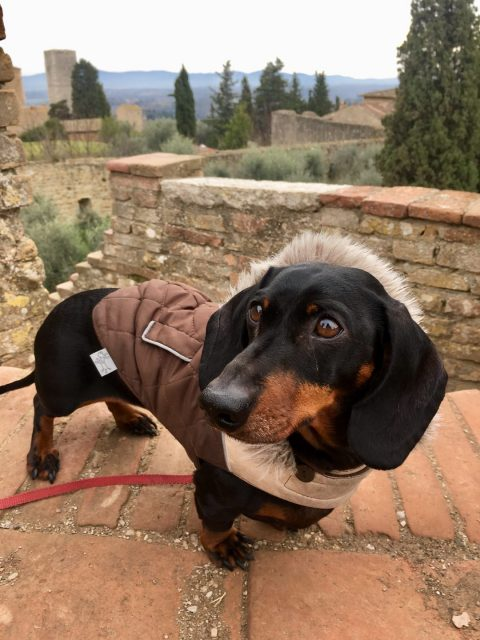 Dog-friendly Tuscany