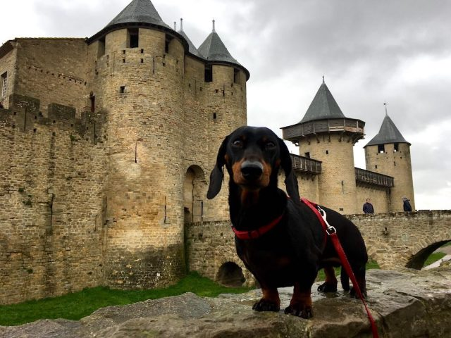 Is France dog friendly?