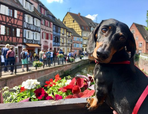 Dog-friendly France