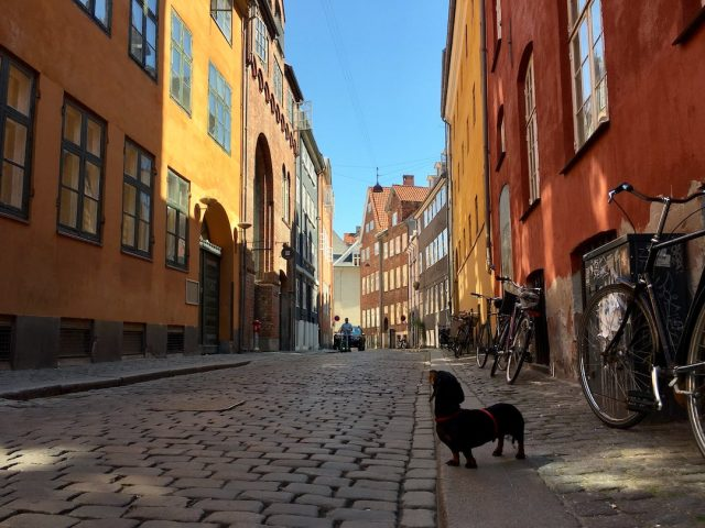 Dog in Copenhagen