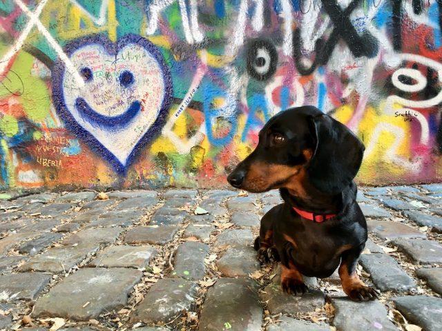 Dog-friendly Czech Republic