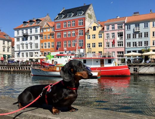 Dog-friendly Copenhagen