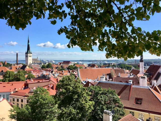 Tallinn dog-friendly sightseeing