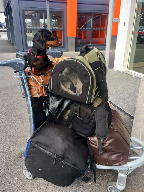 Europe flying with pets