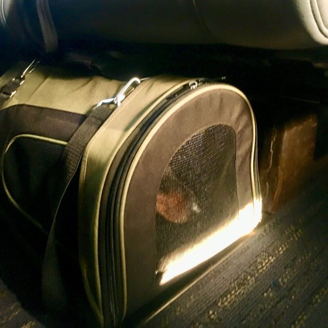 Amtrak pet carrier