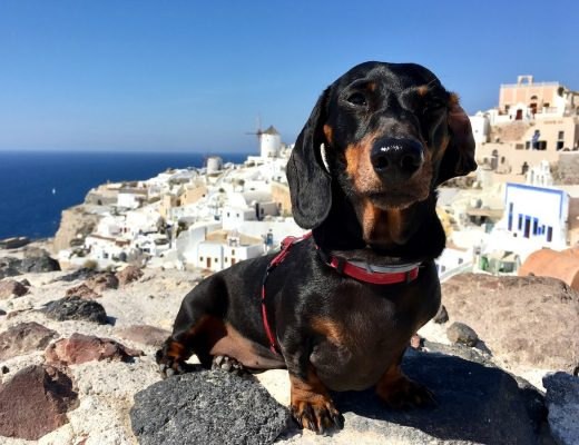 Travelling to the Greek Islands with a dog