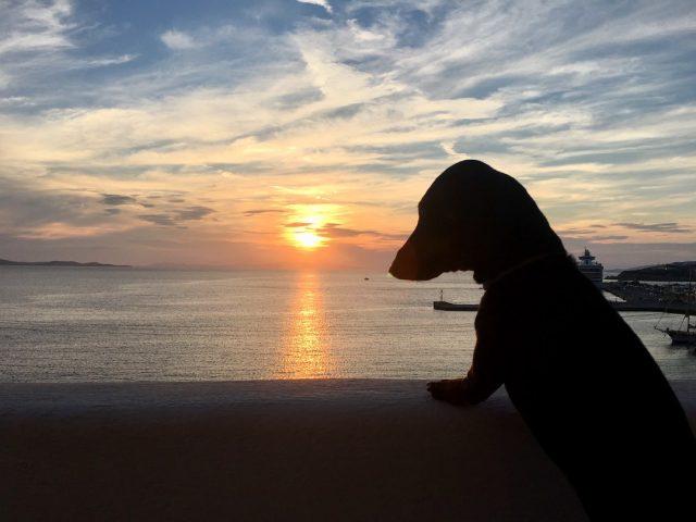 Leishmaniasis prevention dogs