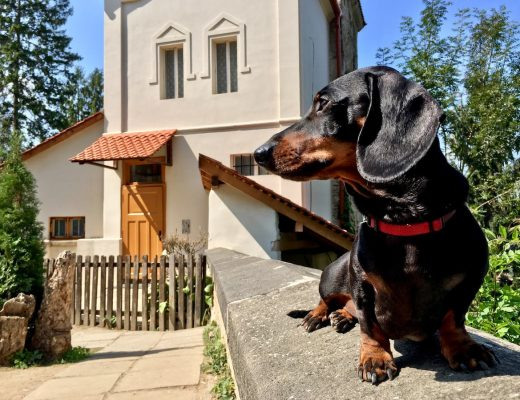 Dog-friendly Romania