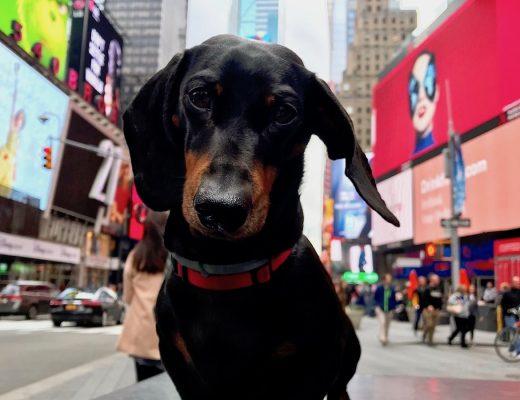 Dog-Friendly New York
