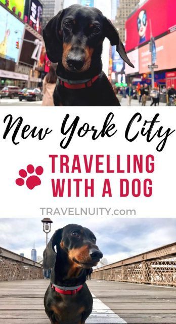 Dog-Friendly New York: Visiting New York City with a Dog